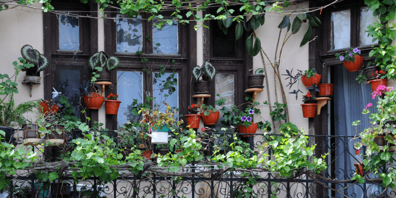 best plants for the balcony